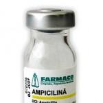 Prospect Ampicilina