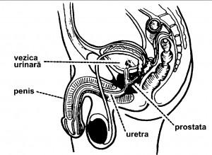Proscar pentru prostata marita