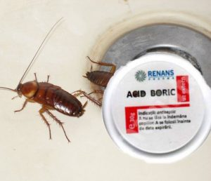 Acid boric e bun la micoze cat si la eliminarea gandacilor de bucatarie