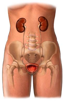Afectiunile aparatului urinar