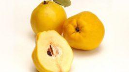 Gutuii pentru Tratare Afectiunilor gastro intestinale si intoxicatii