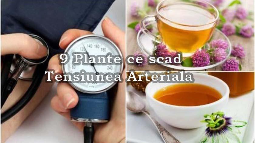 9 Plante ce scad tensiunea arteriala