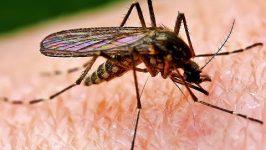 Intepaturi insecte prevenire si tratament