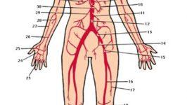 Tratamente naturiste de curatire a  arterelor