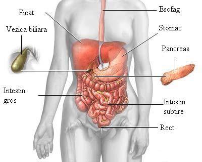 Tratament naturist al pancreasului si ficatului