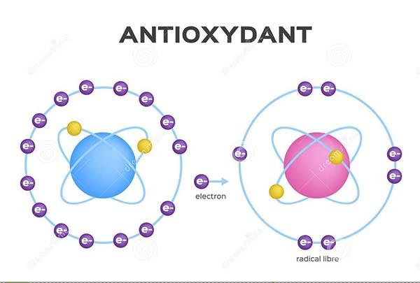 Antioxidantii - arma împotriva îmbãtrînirii