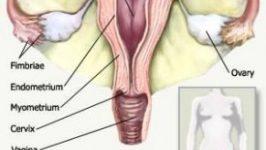 Boli ale aparatului genital feminin