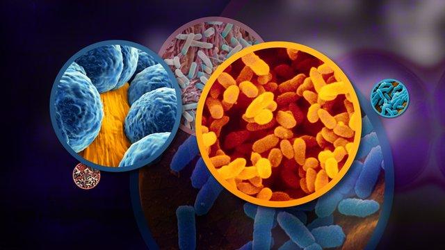 Retete de succes pentru cresterea imunitatii
