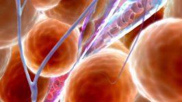 Curatirea sangelui si a limfei