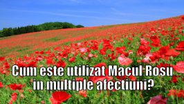 Macul - Efecte benefice de  netagaduit!