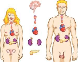 100 de alimente care protejeaza sanatatea principalelor organe