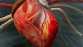 Refacerea muschilor inimii