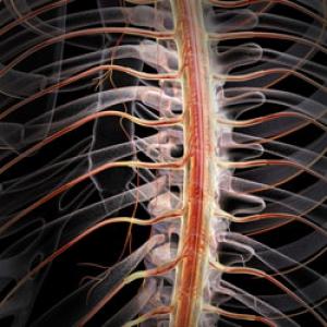 Retete naturiste pentru sistemului nervos