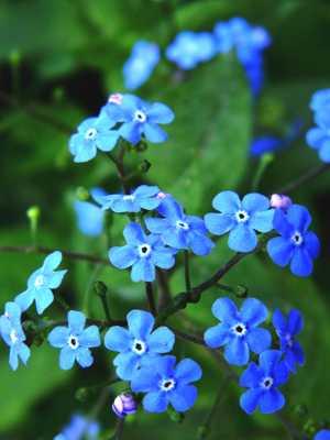 Tratamente cu albastrele