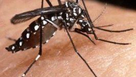 Remedii pentru intepaturi de insecte