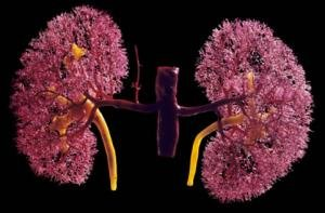 Tratarea rinichilor natural